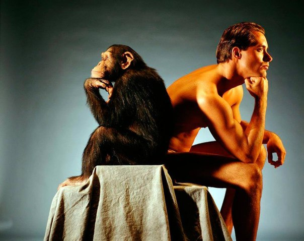 Биомеханика - походка обезьяны и/или человека.